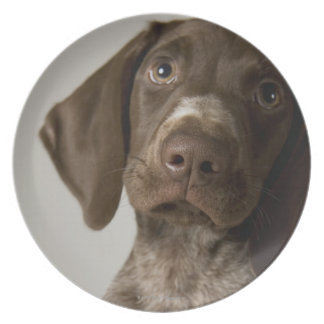 German Short-Haired Pointer puppy Plate
