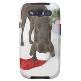 German short-haired pointer sticking snout in samsung galaxy SIII cover
