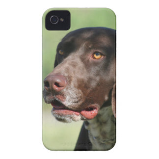 German shorthaired pointer iPhone 4 Case-Mate cases