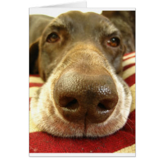 german shorthaired pointer nose card
