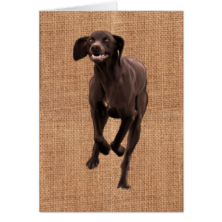German Shorthaired Pointer Pet-lover Greeting Card