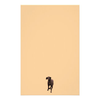 German Shorthaired Pointer Pet-lover Stationery
