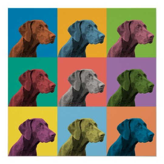 German Shorthaired Pointer Pop-Art Poster