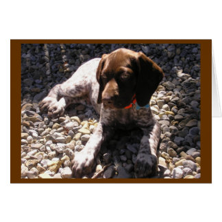 German Shorthaired Pointer Puppy Chillin' Note Card