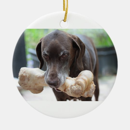 german shorthaired pointer with bone christmas ornament
