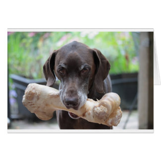 German shorthaired pointer with bone greeting card