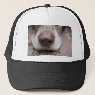 German shorthaired pointers nose trucker hat