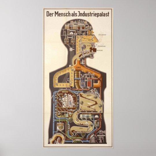 German Vintage Human Biology Poster Print
