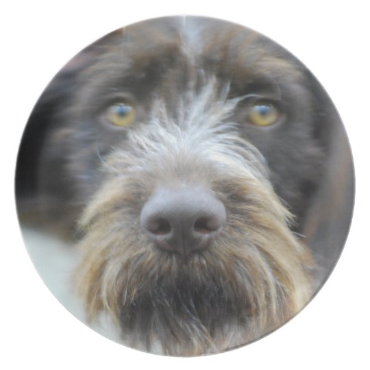 German Wire Haired Pointer Plate