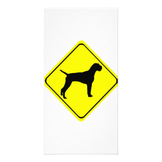 German Wire-Haired Pointer Warning Sign Love Dogs Photo Greeting Card