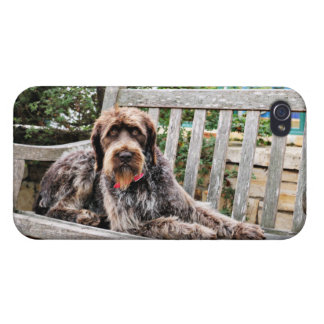 German Wirehaired Pointer - Lexy iPhone 4/4S Covers