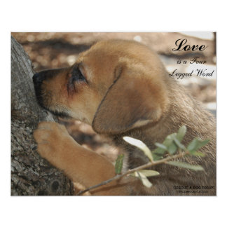 Germand Shepherd Rescue Adopt poster puppy love