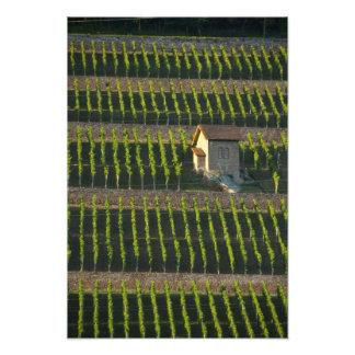 Germany, Franconia, Wertheim. Special hillside 2 Photo Print
