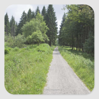 Germany, Thuringia, path in forest Square Sticker
