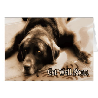 Get Well Chocolate Labrador Retriever Dog Greeting Card