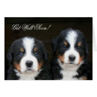 Get Well Soon Bernese mountain dog pups card