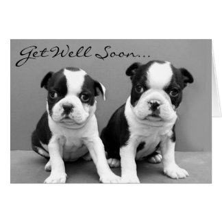 Get Well Soon Boston Terrier Puppies card