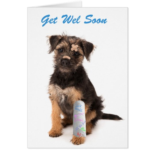 Well-liked Get well soon card Border Terrier dog | Zazzle.co.uk MM88