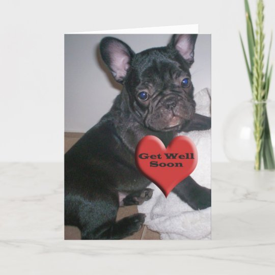 Get Well Soon French Bulldog Card Zazzlecouk