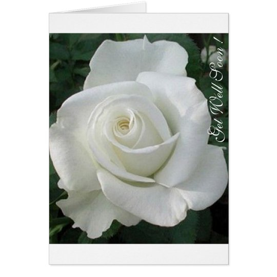 Get Well Soon, I care !Lovely White Rose