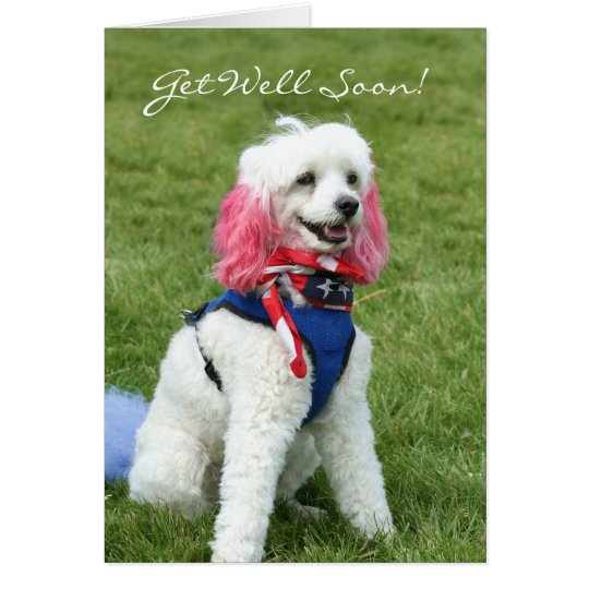 Get Well Soon poodle greeting card