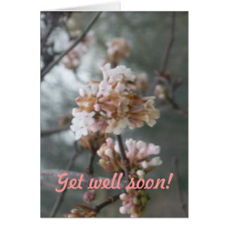 Get Well Soon! (winter blossom) - Postcard Greeting Card