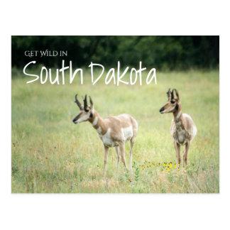 Get Wild in South Dakota Postcard