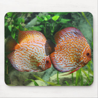 "Get your ""Discus On"" Mouse Mat"