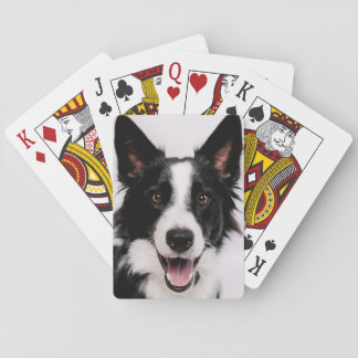 Getty Images | A Smiling Border Collie Playing Cards