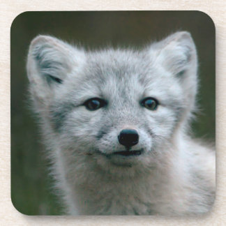 Getty Images | Arctic Fox Kit Coaster
