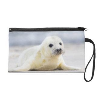 Getty Images | Baby Seal Wristlet