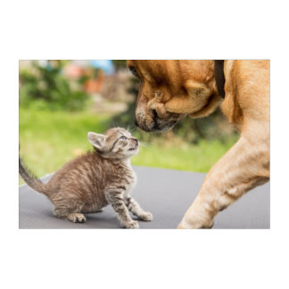 Getty Images | Dog & Cat In Love Acrylic Print