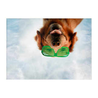Getty Images | Dog With Glasses Acrylic Wall Art
