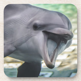 Getty Images | Dolphin Coaster