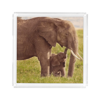 Getty Images | Elephant & Baby Acrylic Tray
