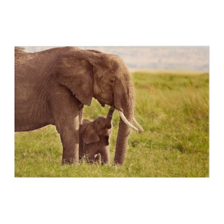 Getty Images | Elephant & Baby Acrylic Wall Art