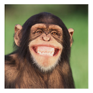 Getty Images | Grinning Chimpanzee Acrylic Wall Art