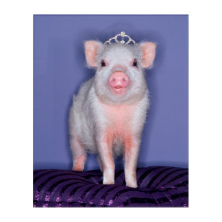 Getty Images | Prize Piglet Acrylic Wall Art