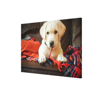 Getty Images | Puppy On A Sofa Canvas Print