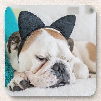 Getty Images | Sleepy Dog with Cat Headband Coaster