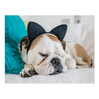 Getty Images | Sleepy Dog with Cat Headband Postcard