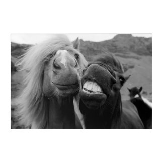 Getty Images | Smiling Horses Acrylic Print