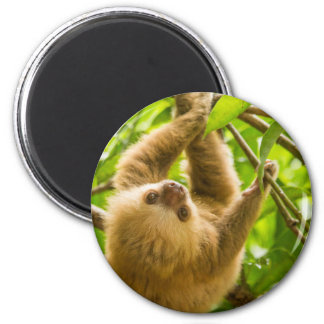 Getty Images | Upside Down Sloth Magnet