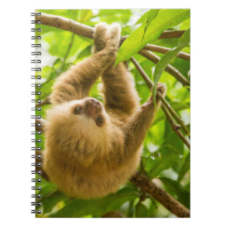 Getty Images | Upside Down Sloth Notebook