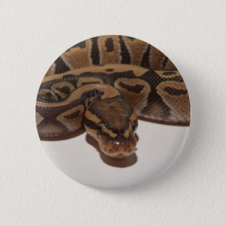 Ghost Ball Python Button