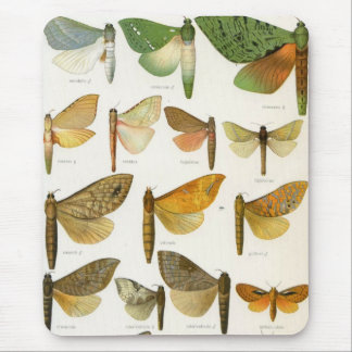 Ghost Moths Mouse Pad