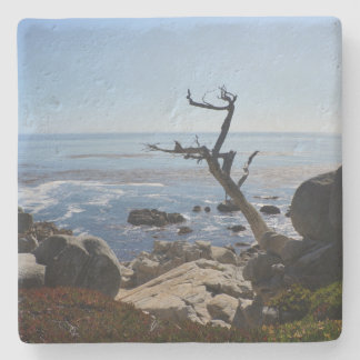 Ghost Tree – Scenic 17 Mile Drive Coaster