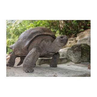 Giant Aldabra Tortoise Acrylic Wall Art