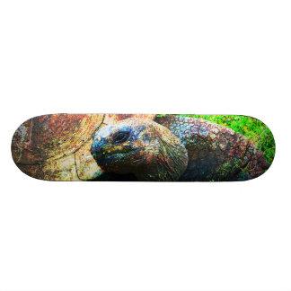 Giant Aldabra Tortoise Grunge, Kansas City Zoo 20 Cm Skateboard Deck