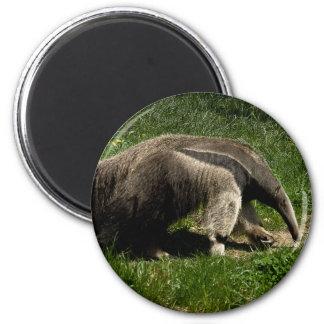 Giant Anteater 6 Cm Round Magnet